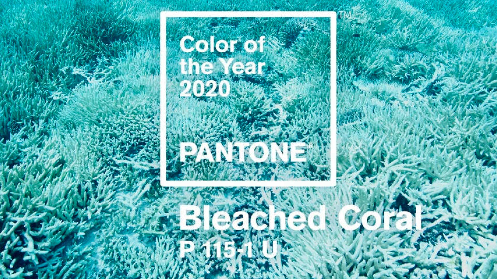 Cor do ano 2020: Pantone