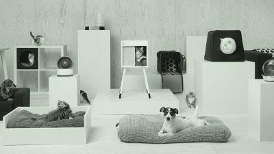 design de produtos para pets