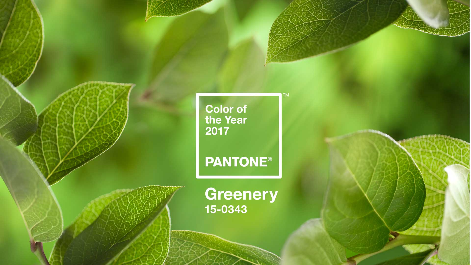 Cor do ano 2017: PANTONE Greenery 15-0343