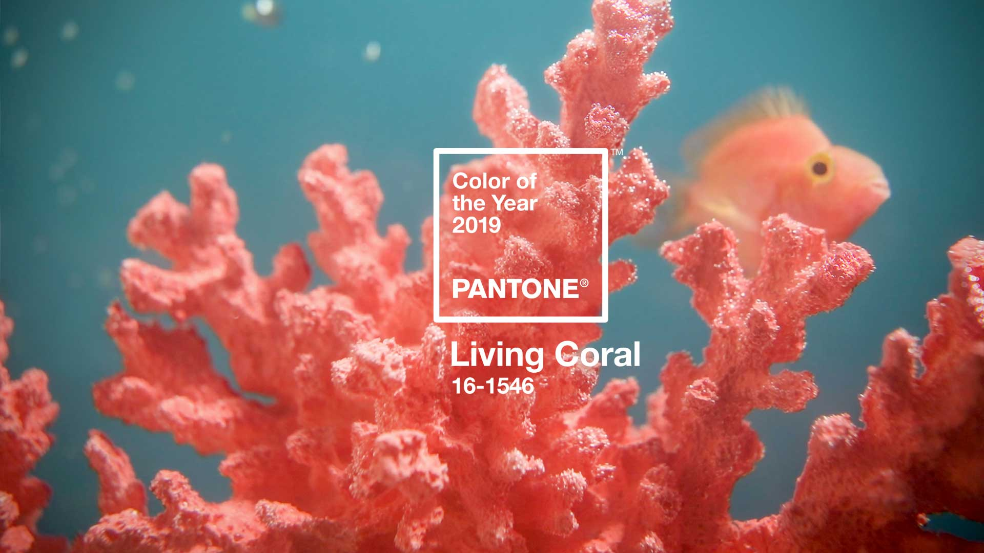 Cor do ano 2019: PANTONE Living Coral 16-1546
